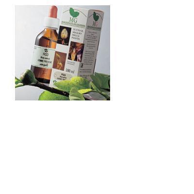 betulla (betula pubescens) amenti macerato di gemme